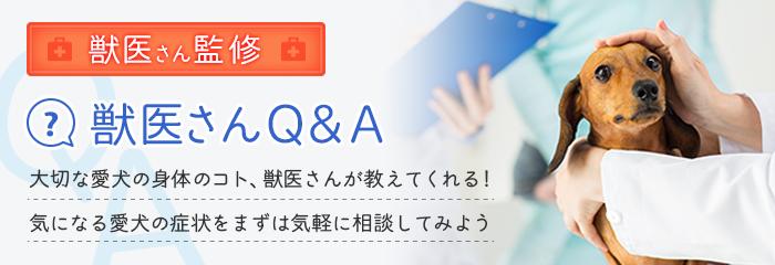 Q&Aバナー
